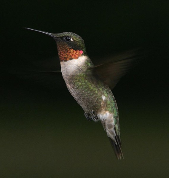 hummers_026