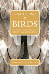 GatheringofBirds