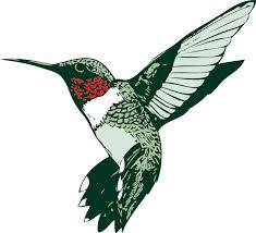 Hummingbird5:8