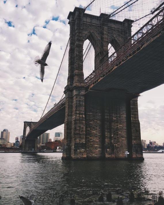 seagull-brooklynbridge