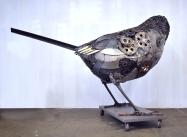 sparrow back