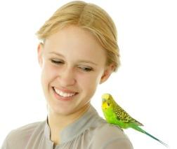 ShoulderBird