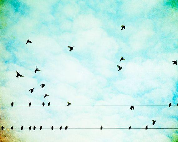 birdswiresky