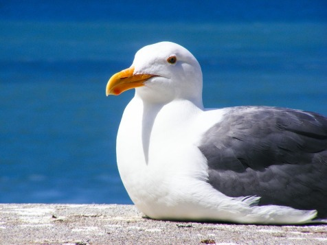 seagull-205528_960_720