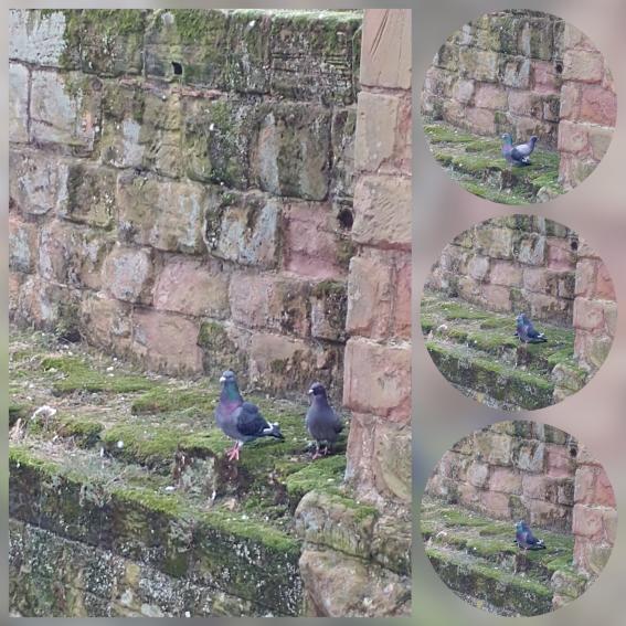 photocollage_2018713145018571