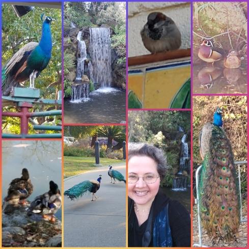 LA Arboretum #2