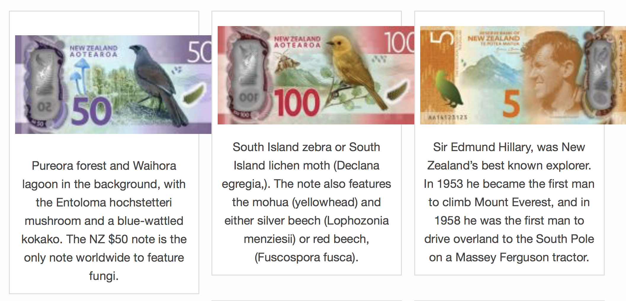 Birds on New Zealand Notes 2